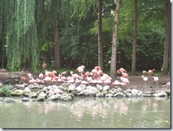 2011.07.26-002 flamants roses