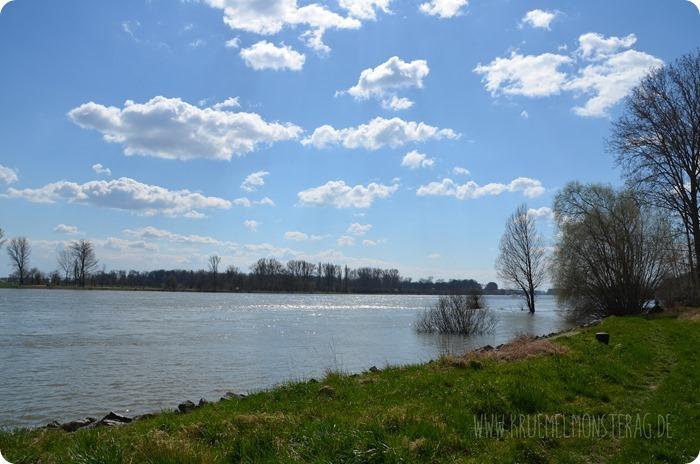 Ostersonntaghunderunde (10) am Rhein