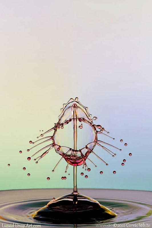 liquid-drop-art-gotas-caindo-foto-velocidade-hora-certa-desbaratinando (266)
