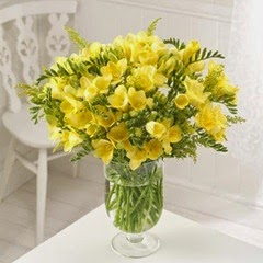 25 Yellow Guernsey Freesias fresh flowers by post with free delivery
