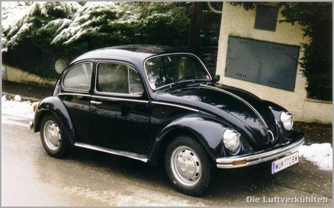 Schwarzer Käfer 4