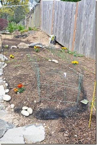 veggiegarden14
