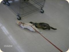 ferret life 009