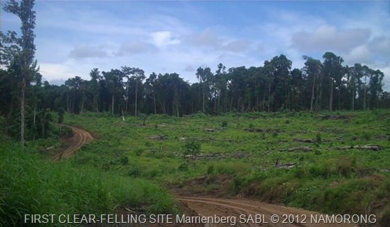 FIRST CLEAR-FELLING SITE Marrienberg SABL © 2012 NAMORONG