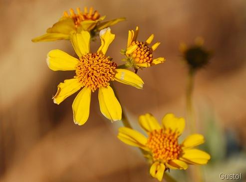4. flower-gusto