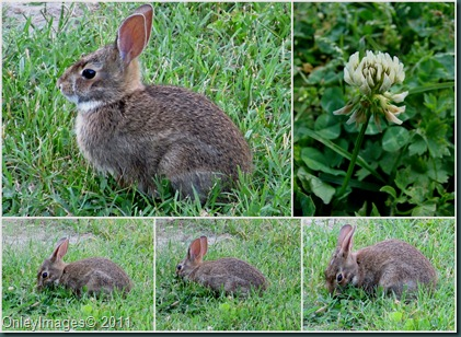 bunny collage0611
