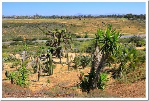 150324_SanDiego_BalboaPark_DesertGarden_012