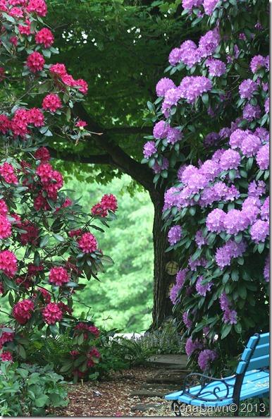 Rhododendron_Garden