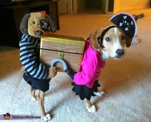 Собака в костюме пирата