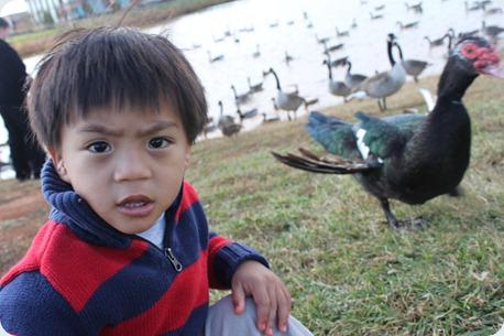 ducks 016