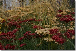 Grasses with grace (gold)
