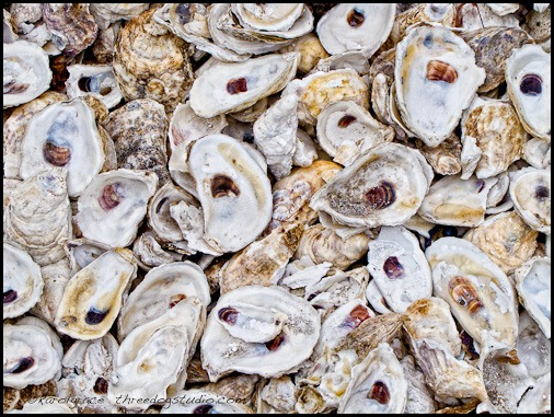 oyster-shell-mulch
