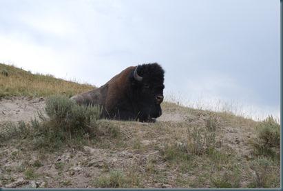Yellowstone 057