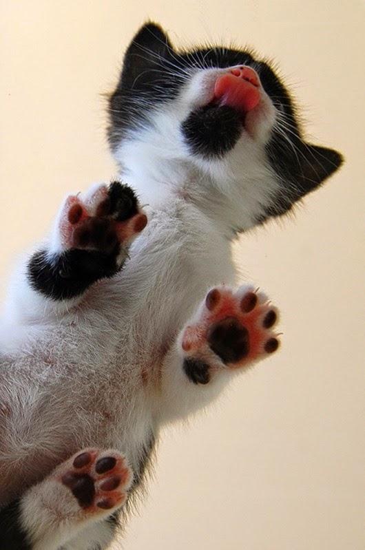 вид-снизу-коты-на-стеклянных-столах-10