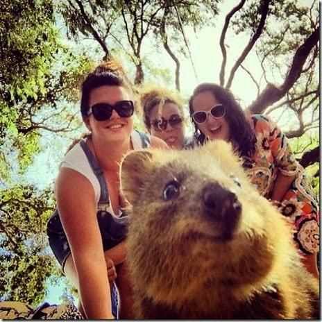 selfies-australian-quokka-022