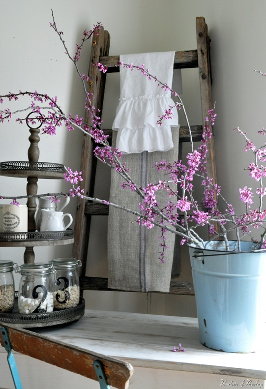 redbuds in corner