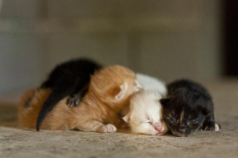 Cute-Kitten-02