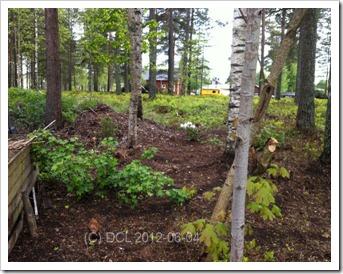Woodlandblommar
