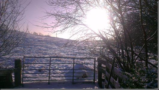 jan 2013 snow 062