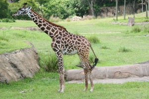 Slickpaw's Magic Kingdom & Animal Kingdom 292