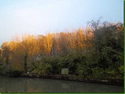 013  Autumn poplars