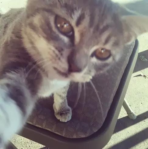 selfie-gato