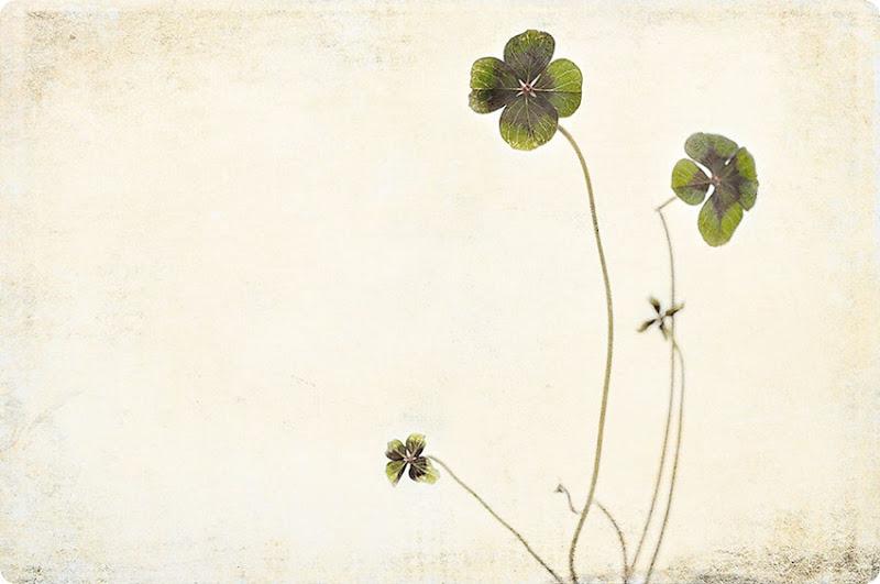 4-leaf-clover2
