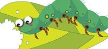 gusano de seda3 blogcolorear com (1)