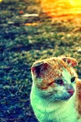 sapiens the cat