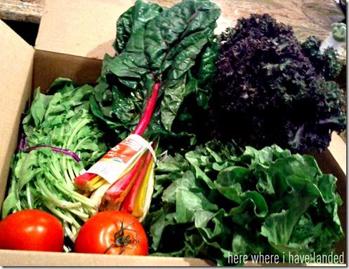 Produce Box with Rainbow Chard