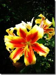flor-tumblr-facebook-31
