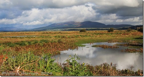 3-wigtown