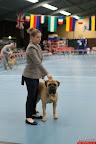 20130511-BMCN-Bullmastiff-Championship-Clubmatch-1588.jpg
