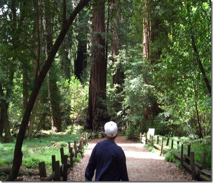 big trees 017