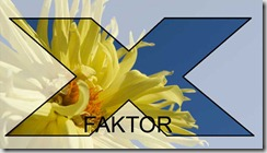 gule-blomster-x