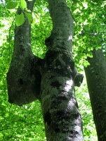 Pogled v drevesne krošnje