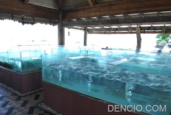 Maribago Bluewater Resort 139