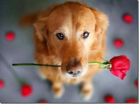 domande frequenti in riproduzione canina 2