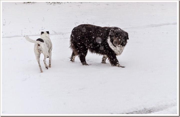 snow-2-25-15-1-8FB