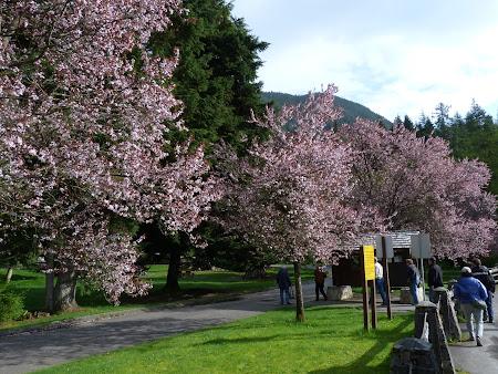 18. flori la cascadele Shannon.JPG