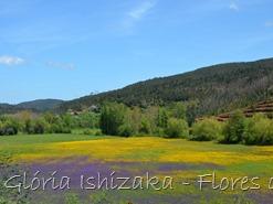 Glória Ishizaka - flores do campo 6