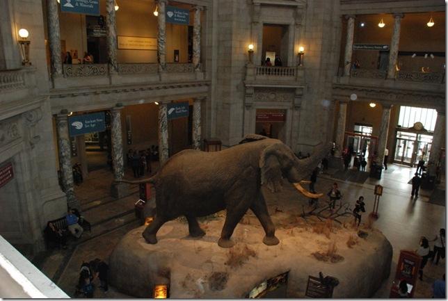 11-12-12 B Museum Of Natural History 034