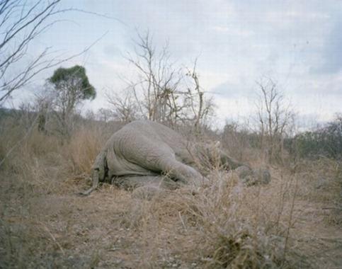 comerse_un_elefante