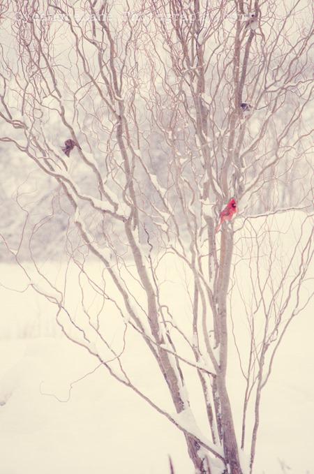 SycamoreLane Photography-149