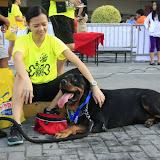 Pet Express Doggie Run 2012 Philippines. Jpg (218).JPG