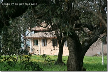 La Selva la casa 4