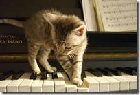 gato pianista blogdeimagenes (32)