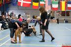 20130511-BMCN-Bullmastiff-Championship-Clubmatch-2378.jpg
