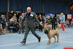 20130510-Bullmastiff-Worldcup-0705.jpg