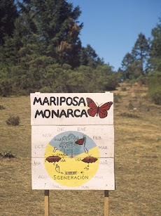 2004 March Mariposa Monarca Michoacan0032.jpg